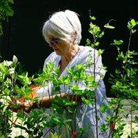 Southern Native Plantings at Longwood Plantation