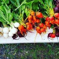 Rambling Roots Farm