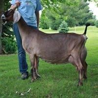 Hoanbu Dairy Goats