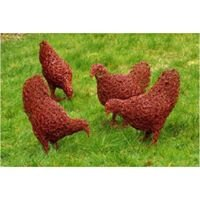 ChickenWire NC