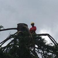 Rich Tree Service