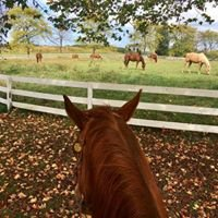 Blended Spirits Ranch Equine-Assisted Therapy Center