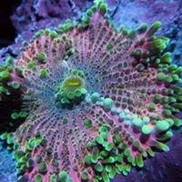 Global Oceanic Life