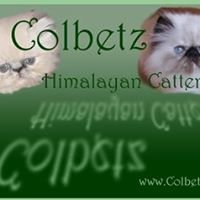 Colbetz Cattery is Closing