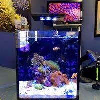 Ultimate Reefs & Aquariums