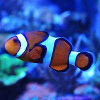 Total Fish & Pets