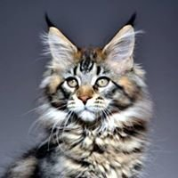 Wallander Maine Coon Cattery