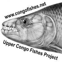 Upper Congo Fishes Project – Poissons du Bassin Supérieur du Congo