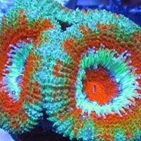 VIP Reef