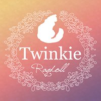 Twinkie Ragdoll Cattery