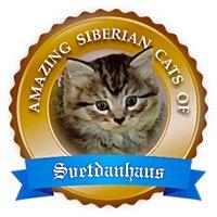 Amazing Siberian Cats of Svetdanhaus