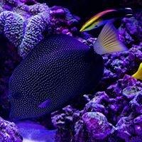 Ocean Corals & Reptiles