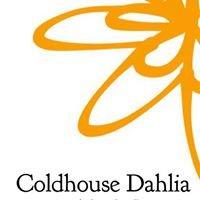 Coldhouse Dahlia