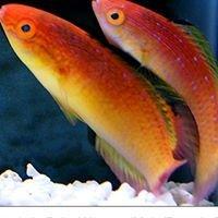 Nahacky's Aquarium