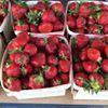 Palos Heights Farmers Market