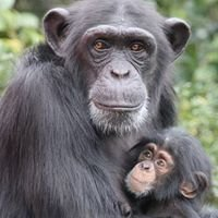 Japan Monkey Centre