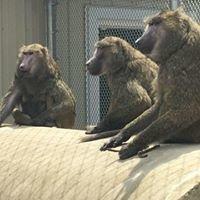 Peaceable Primate Sanctuary