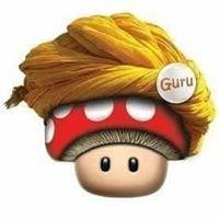 Mushroom Guru - Pty Ltd.