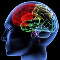 Psychological and Brain Sciences - UMASS Amherst