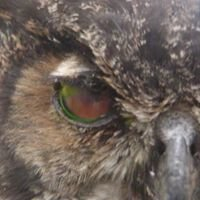 Chattahoochee Nature Center Wildlife Rehabilitation