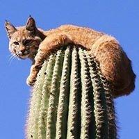 Cactus and Succulent Society of Australia