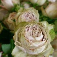 Elegant Blooms Flower Boutique