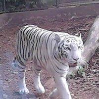 Nyíregyházi Àllatpark- Sóstó Zoo