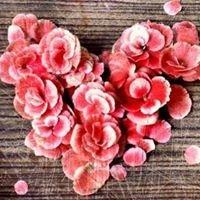 Lynn Doyle Flowers & Events