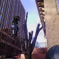 Affordable Tree Service - Tree MD