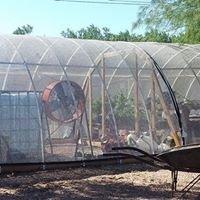 Philabaum Urban Farm