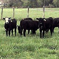 Best View Farms
