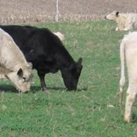 Thistledown Farms LLC