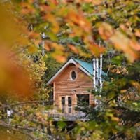 Canopée Lit : cabanes et bulles perchées en forêt