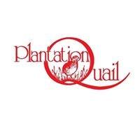 Plantation Quail
