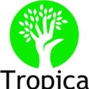 Tropica Mango Rare and Exotic Tropical Fruit Tree Nursery