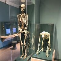 Harvard University Harvard Museum of Natural History