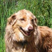 Smiling dog Landscapes