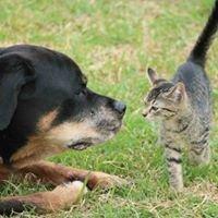 Port Macquarie Animal Welfare Service (PMAWS)