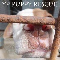 YP Puppy Rescue