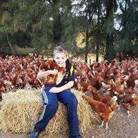 Glenview poultry  farm eggs