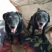 Houston Pro Pet Sitters