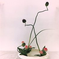 Ikebana on Halsted - Ohara School of Ikebana Chicago Class