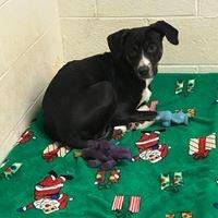 The Greene County Animal Shelter of Virginia