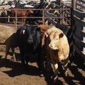 Brett Gray Ranch