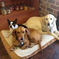 Pet Care Center Chalmette