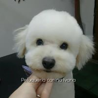 Peluquería Canina - Ivana - Pilar