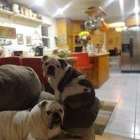 The Glencoe Animal Shelter