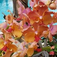 SunVillas - Jamaica