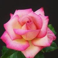 Mills Magic Rose Mix/Beaty Fertilizer