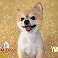 Cameo's Pet Spa, LLC